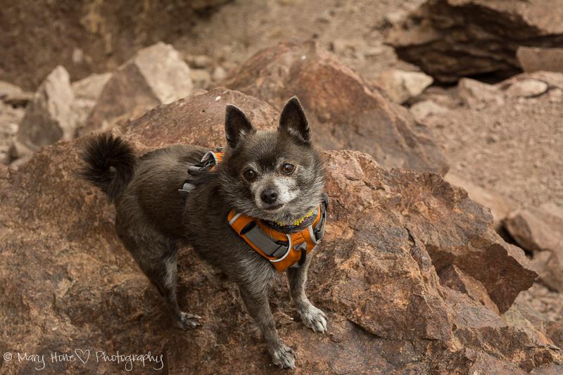 Roxy on a rock