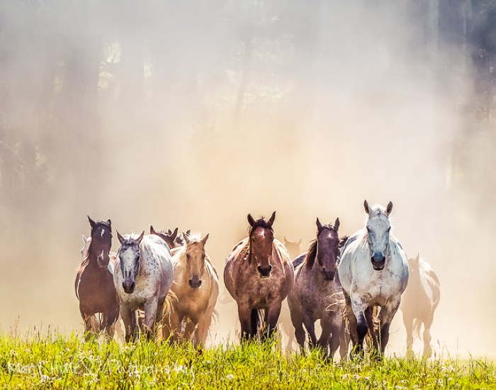 Photographing horses, Jackson Hole Wyoming