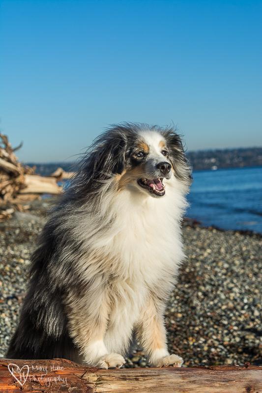 Supermodel dog