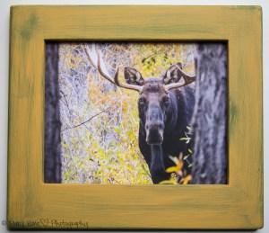 Custom framed photos