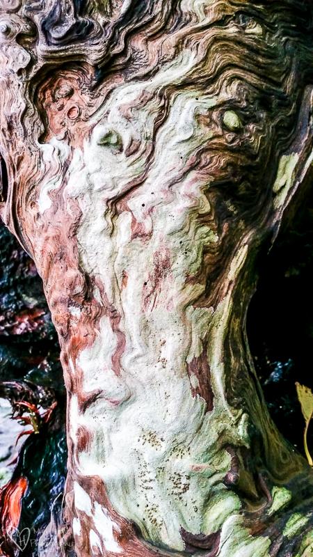 Naturally created art, driftwood art