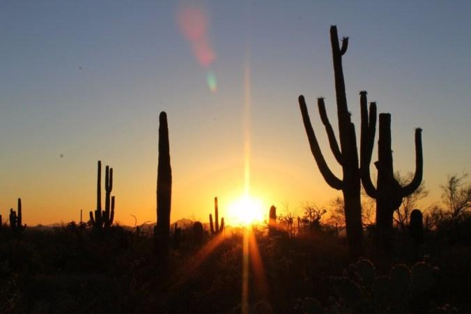 xk93-saguaro-national-park-pima-county-arizona-1024x683