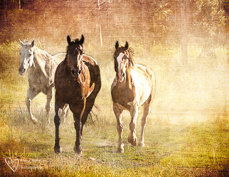 Textured horses
