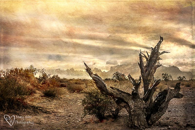 textured desert