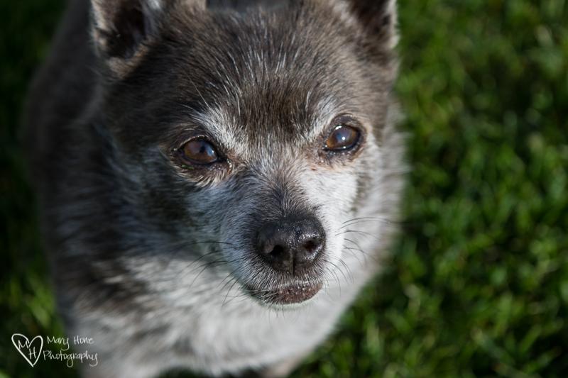 A Doggie Update