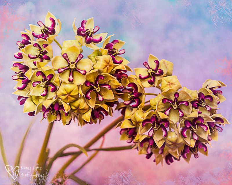 Wild Year for Wild Flowers