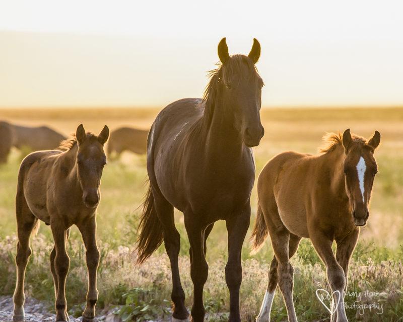 Wild horses. Horses in Silhouette