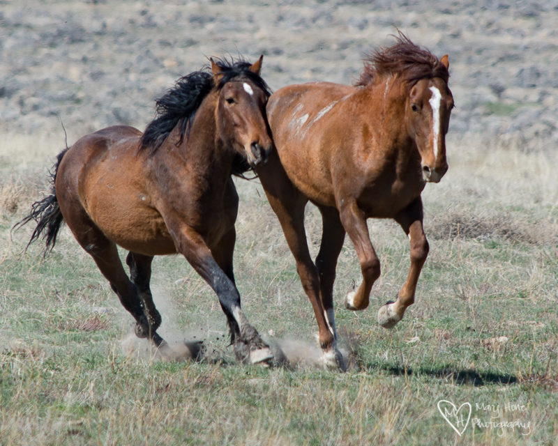 running horses. Even animals like to have fun