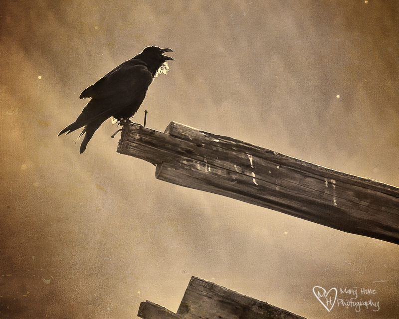 telling stories. raven