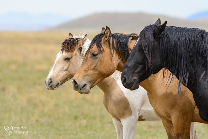 Nothing Like a Little Wild Horse Therapy, wild horses