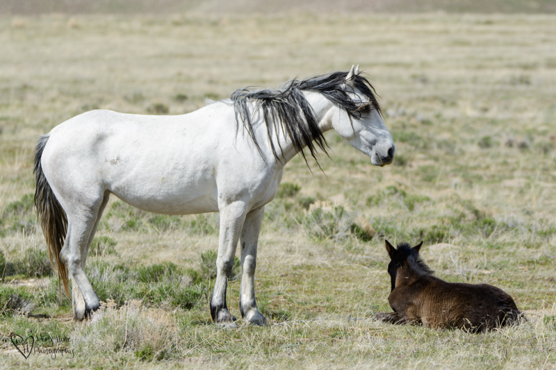 wild horse mom and foal