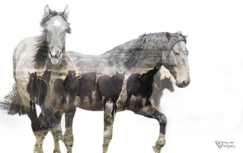 double exposure horses