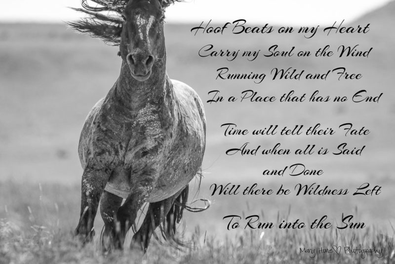 hoof beats on my heart, wild horses