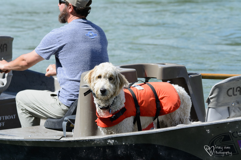dog in a fishing boat