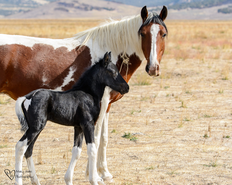 new wild horse filly