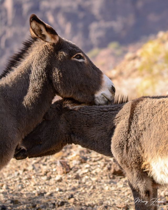 mom and young burro