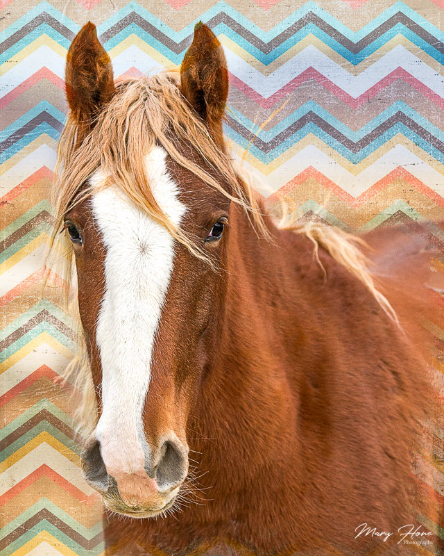 wild horse, fine art photography