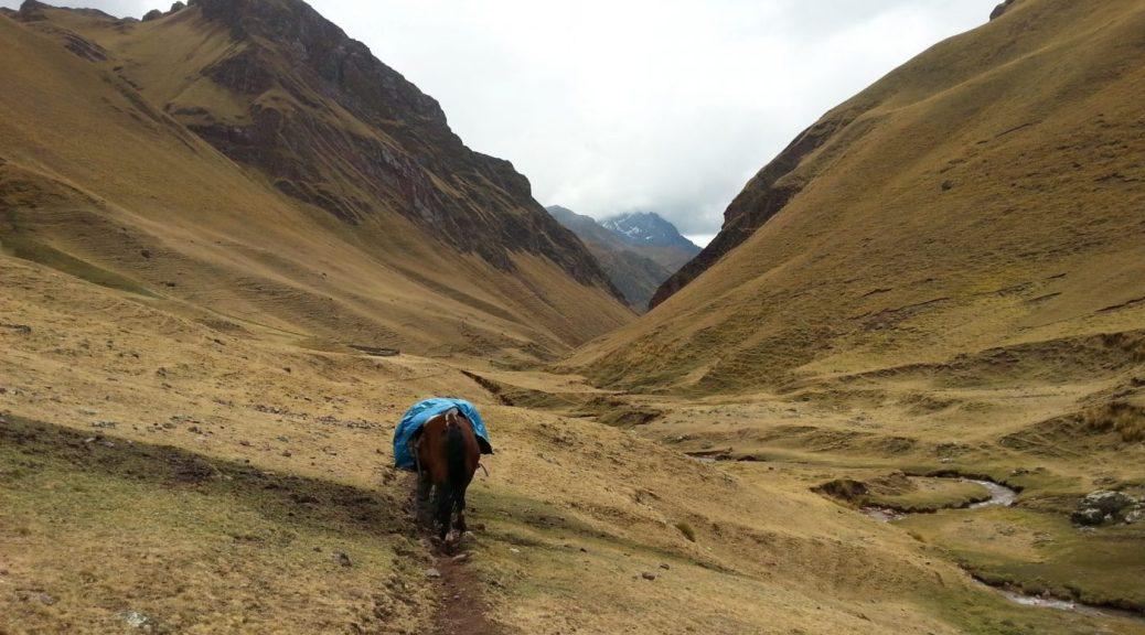 Bringing up the rear to Machu Picchu