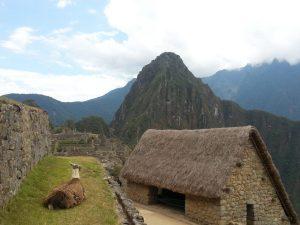 More llamas at Machu Picchi