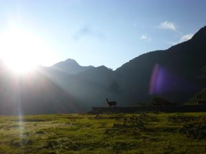 A llama enjoyed the first rays of sunshine at Machu Picchu