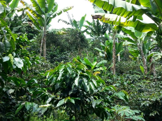 Don Elias Coffee Plantation in Salento - horse riding Salento