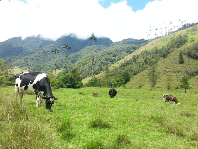 The Hike in Cocora Valley