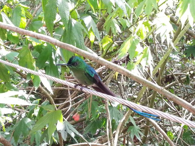 A hummingbird at the Acaima Sanctuary in Cocora Vallley