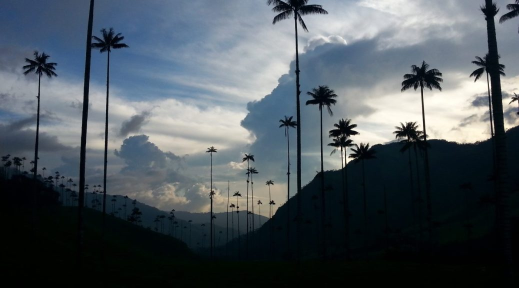 Wax Palm Trees in Cocora Valley Colombia - Backpacking South America