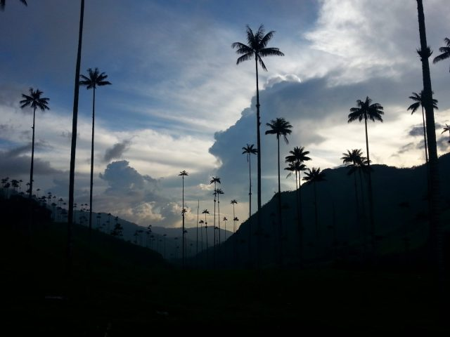 Wax Palm Trees in Cocora Valley Colombia - Backpacking Colombia
