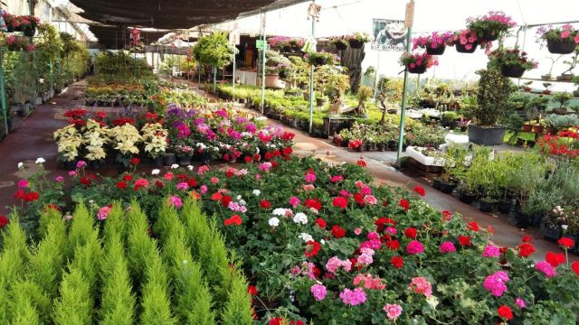Rows of beautiful flowers from the many greenhouses on the banks of the rivers in Xochimilco