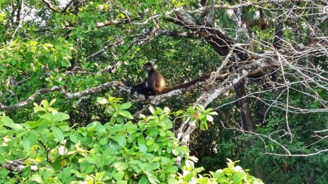 The Friendly Spider Monkey
