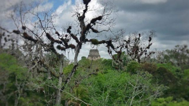 Explore the hidden corners of Tikal after a Tikal sunrise tour