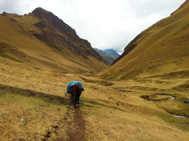 The trek to Machu Picchu - Emergency Horse to help with altitude sickness on the Inca Trail