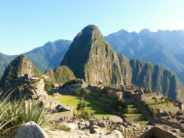 Machu Picchu with plant - photos of Machu Picchu