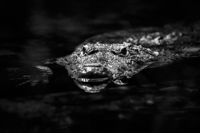 Night Diving with Crocodiles in Tulum Mexico