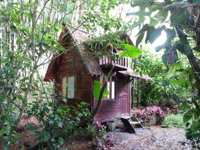 A Cute Cabin in the Forest of Mindo - Backpacking Ecuador Travel Guide
