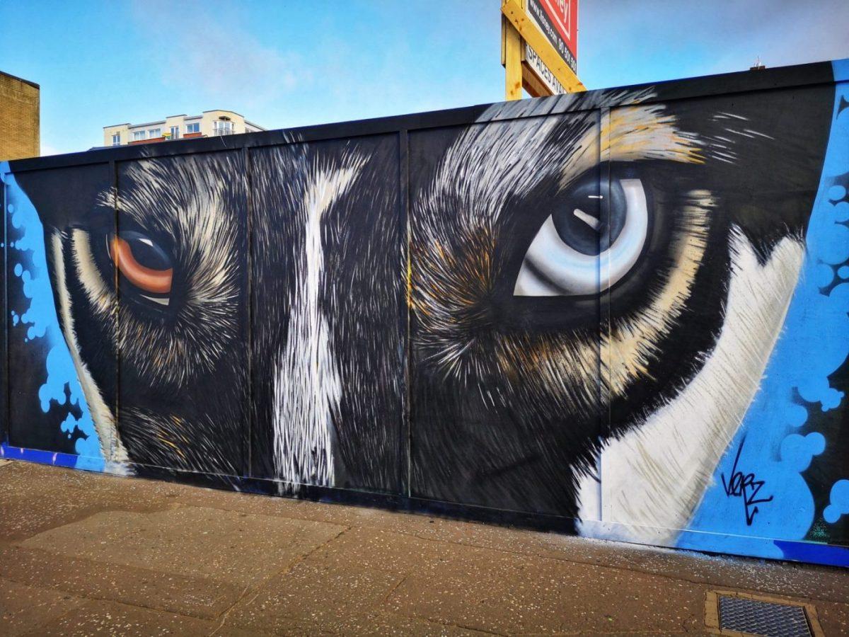 Belfast Street Art - A puppy with Heterochromia