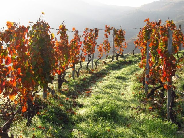 Douro Valley - The Best Walking Holidays in Europe