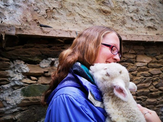 Cuddles with a cute lamb on the Slea Head Drive - Touring Ireland is fun!