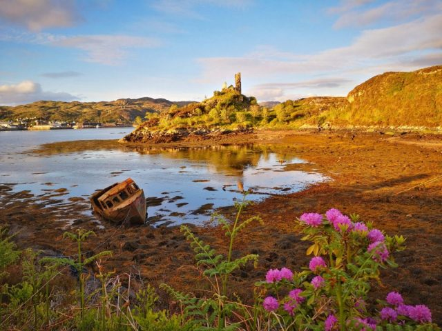Caisteal Maol on the Isle of Skye - Castle ruins in the background across a bay with an old boat and purple flowers in the foreground