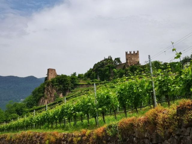 Segonzano Castle and Vineyards