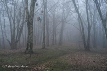 Bear bags in the fog.