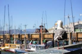 Life at Fisherman's Wharf