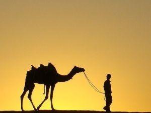 camello espíritu animal