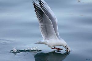 magic seagull totem