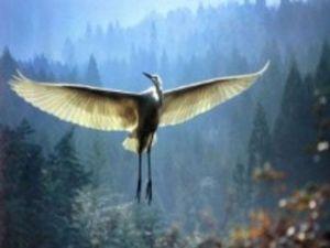 romantic crane