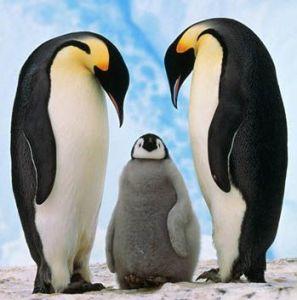 totem pinguin