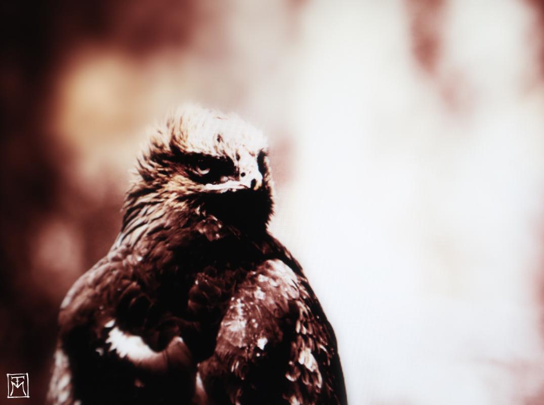 El Bosque - Surreal Wildlife Photography