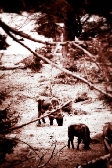 El Bosque - Surreal Wildlife Photography - Bison