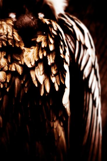 El Bosque - Surreal Wildlife Photography - Eagle feathers